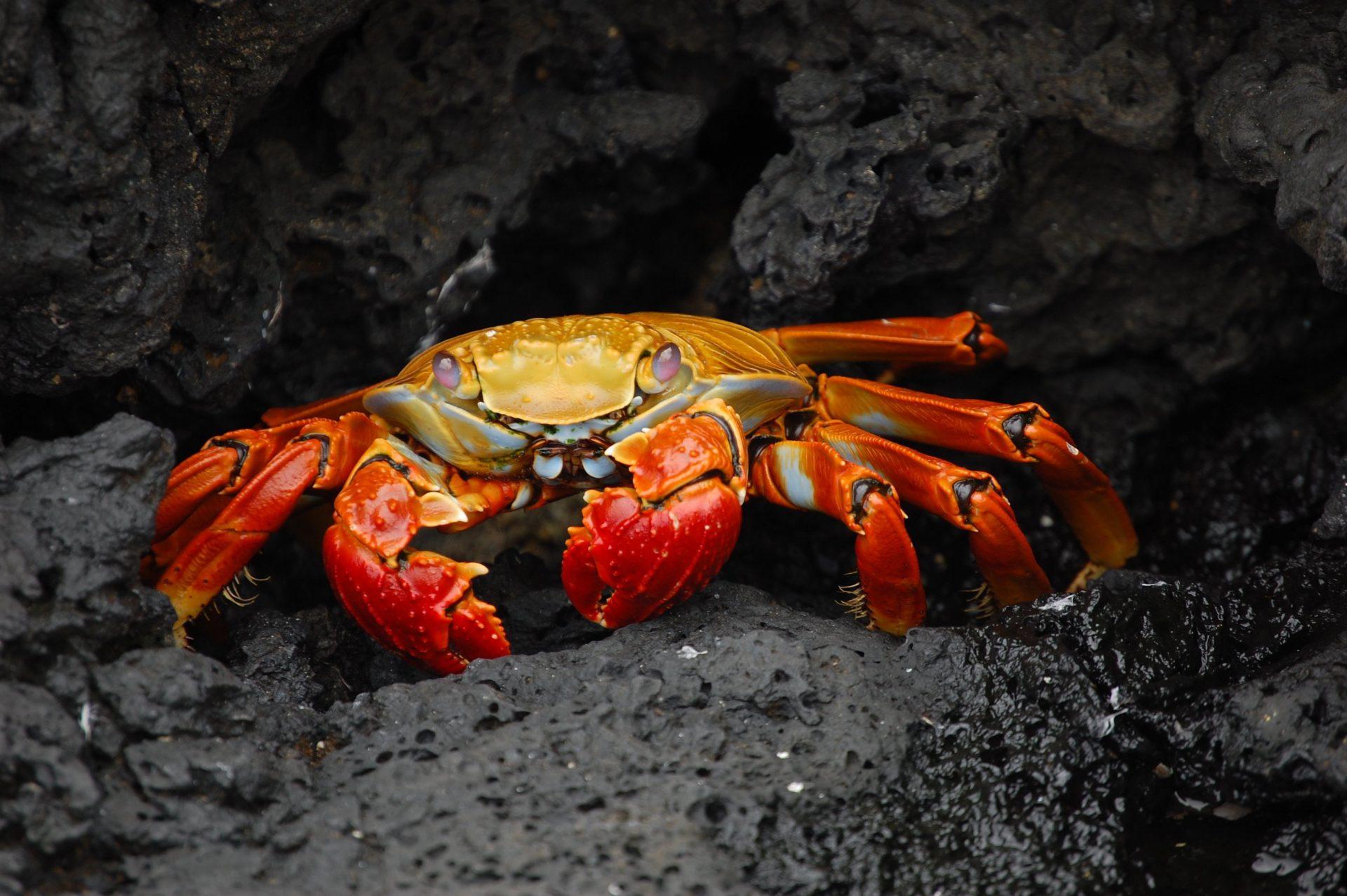 Resultado de imagen para Los crustáceos